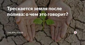 Почему трескается земля на огороде после полива