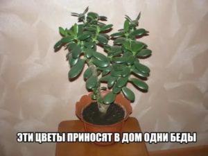 2 растения, которые приносят горе и беды в дом